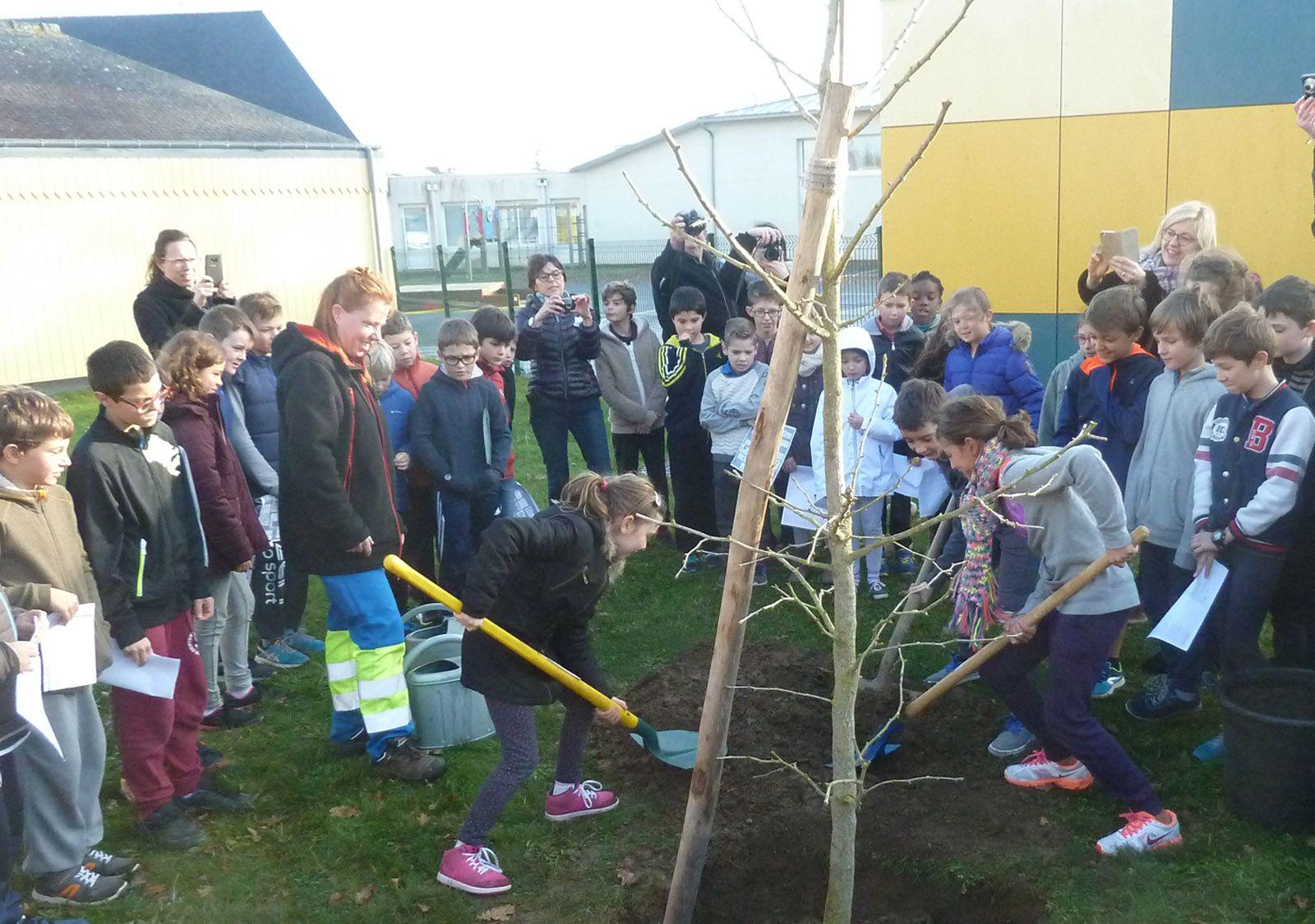 Plantation de l'arbre de la laïcité